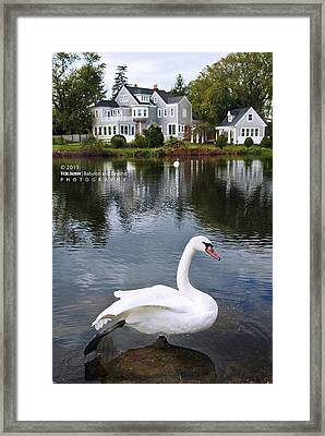 Look At What The Swan Can Do Framed Print by Vicki Jauron