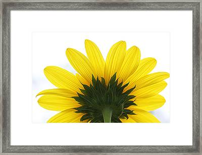 Look Away Framed Print by Becky Lodes