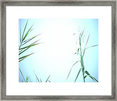 Framed Print featuring the photograph Look Of Fog by Lizi Beard-Ward