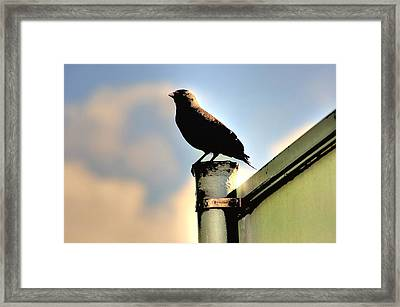 Look Out Post Framed Print