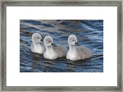 Look Right Framed Print