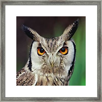 Look Right Through Me Framed Print by Miguel Capelo