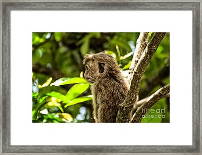 Look To The Future Framed Print by Venura Herath