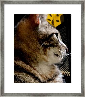 Framed Print featuring the photograph Look To The Light by Lisa Brandel