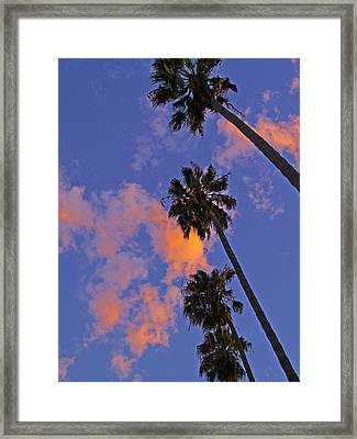 Look Up Framed Print by D Wash