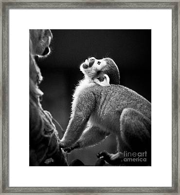 Look Up Framed Print by Darcy Michaelchuk