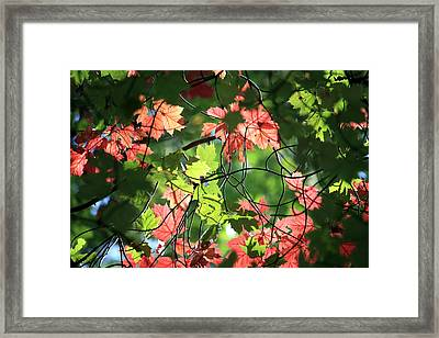 Look Up In Autumn Framed Print by Julia Mayo