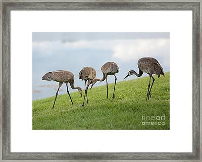 Look What I Found Framed Print by Carol Groenen