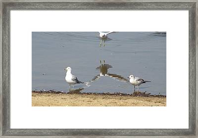 Look Who Just Dropped In Framed Print