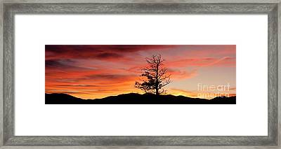 Lookin' Out My Front Door Framed Print by Angelique Olin