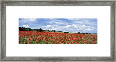 Looking Across Field Of Poppies To Framed Print