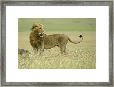 Looking Around Framed Print by Michele Burgess