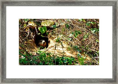 Looking At Me Framed Print by Lenroy Johnson