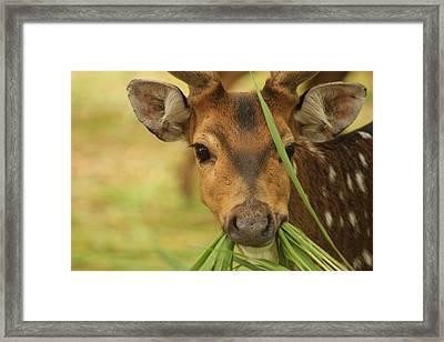 Looking At Me Framed Print by Mallika Rajasekaran