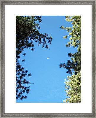 Looking At The Moon Framed Print by Steve Huang