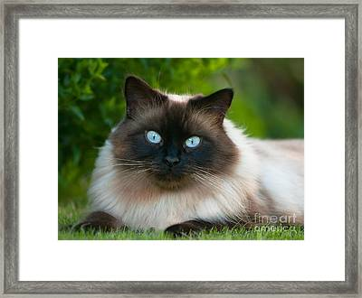 Framed Print featuring the photograph Looking At You by Andrew  Michael