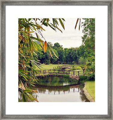 Looking Back Framed Print by Craig Wood