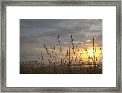 Looking Back Framed Print by Lynn Davenport