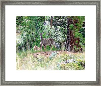 Looking Both Ways Framed Print by Will Borden
