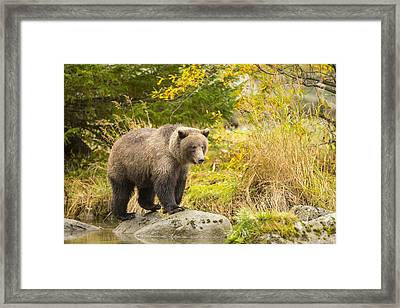 Looking For A Meal In The Autumn Framed Print by Tim Grams