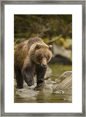 Looking For An Easy Meal Framed Print by Tim Grams