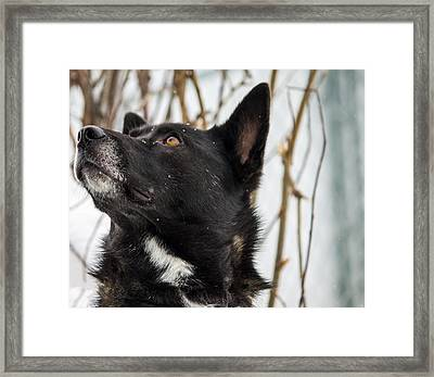 Looking For Approval Framed Print