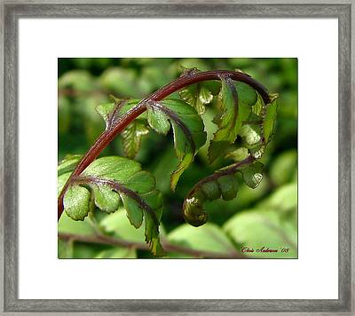 Looking For Crosier Framed Print by Chris Anderson