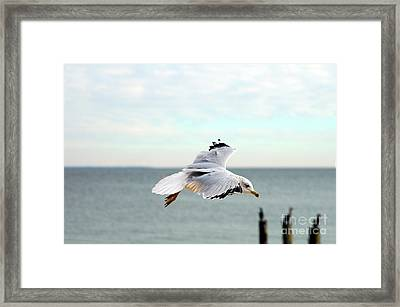 Framed Print featuring the photograph Looking For Dinner by Clayton Bruster