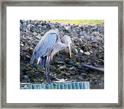 Looking For Lunch Framed Print by Marilyn Holkham