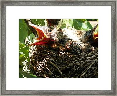 Framed Print featuring the photograph Looking For Mama by Chad and Stacey Hall
