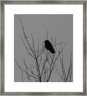 Looking Forward Framed Print by Artist Orange
