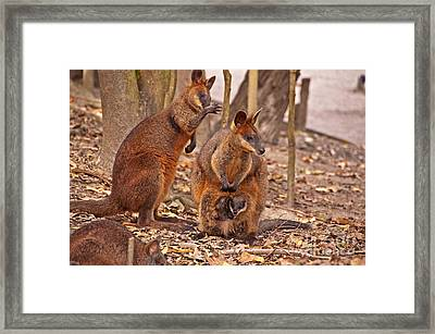 Looking Out From The Safety Of The Pouch Framed Print by Bob and Nancy Kendrick