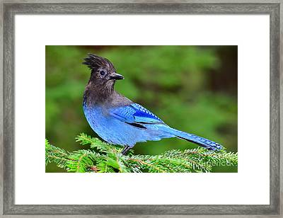 Looking Over His Domain Framed Print by Jack Moskovita
