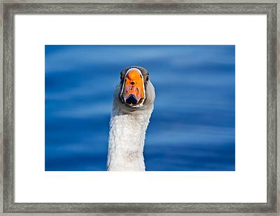 Looking Straight Ahead Framed Print by Ann Murphy
