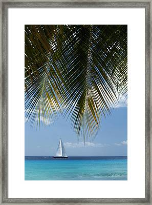 Looking Through Palm Trees To Large Framed Print by Axiom Photographic