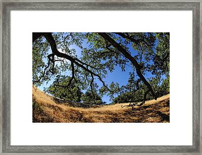 Looking Through The Oaks Framed Print by Donna Blackhall