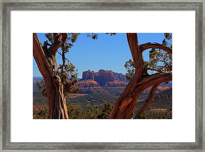 Looking Through The Trees Framed Print