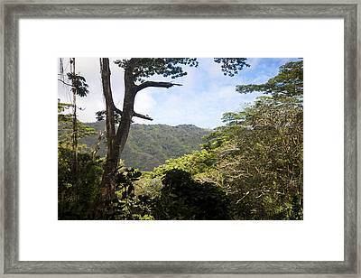 Looking Through The Trees In A Tropical Framed Print by Taylor S. Kennedy