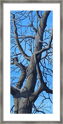 Looking Up   Sold Framed Print