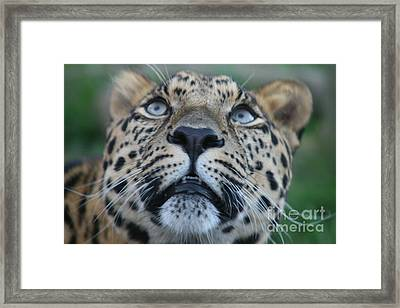 Looking Up Framed Print by Carol Wright