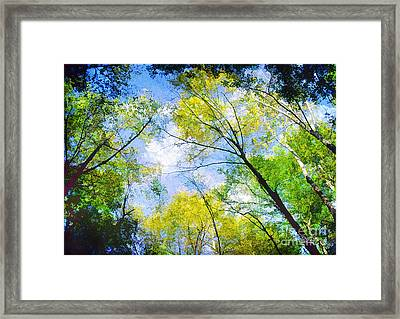 Looking Up Framed Print by Darren Fisher
