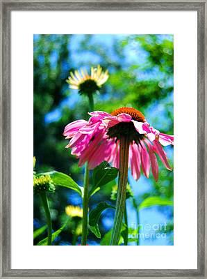 Looking Up Framed Print by Linda Mesibov