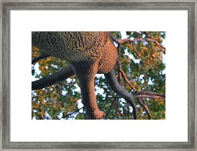 Looking Up Framed Print by Naomi Berhane