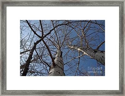 Looking Up Framed Print by Rachel Duchesne