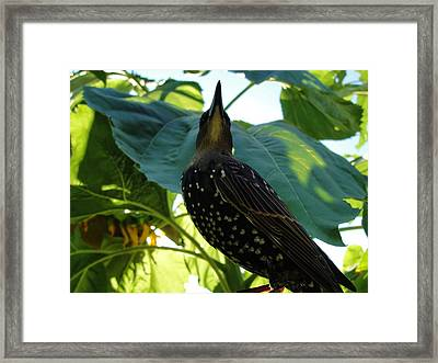 Looking Up Towards Her Future Path Framed Print by Katie Bauer