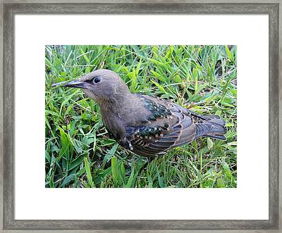 Looking Up With A Bird Grin Framed Print by Katie Bauer