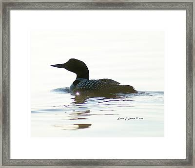 Framed Print featuring the photograph Loon 3 by Steven Clipperton