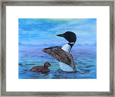 Loon Mother And Baby Framed Print by Judy Filarecki