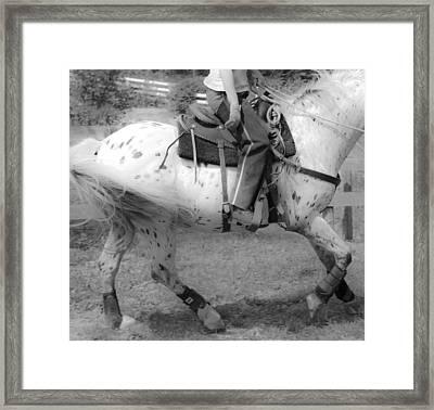 Lope Framed Print by Betsy Knapp