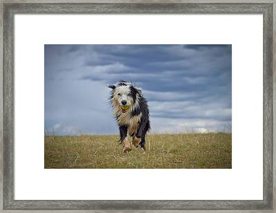 Lord Of Storm Framed Print by Anda Stavri Photography